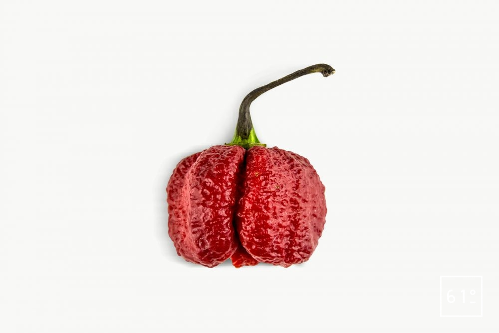 Piment Trinidad Moruga Scorpion Red