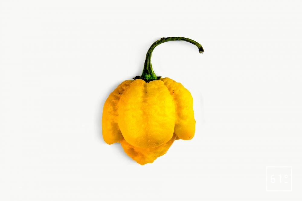 Piment Trinidad Moruga Scorpion Yellow