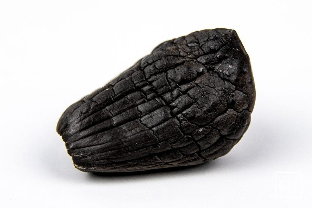 Gousse d'ail noir entière