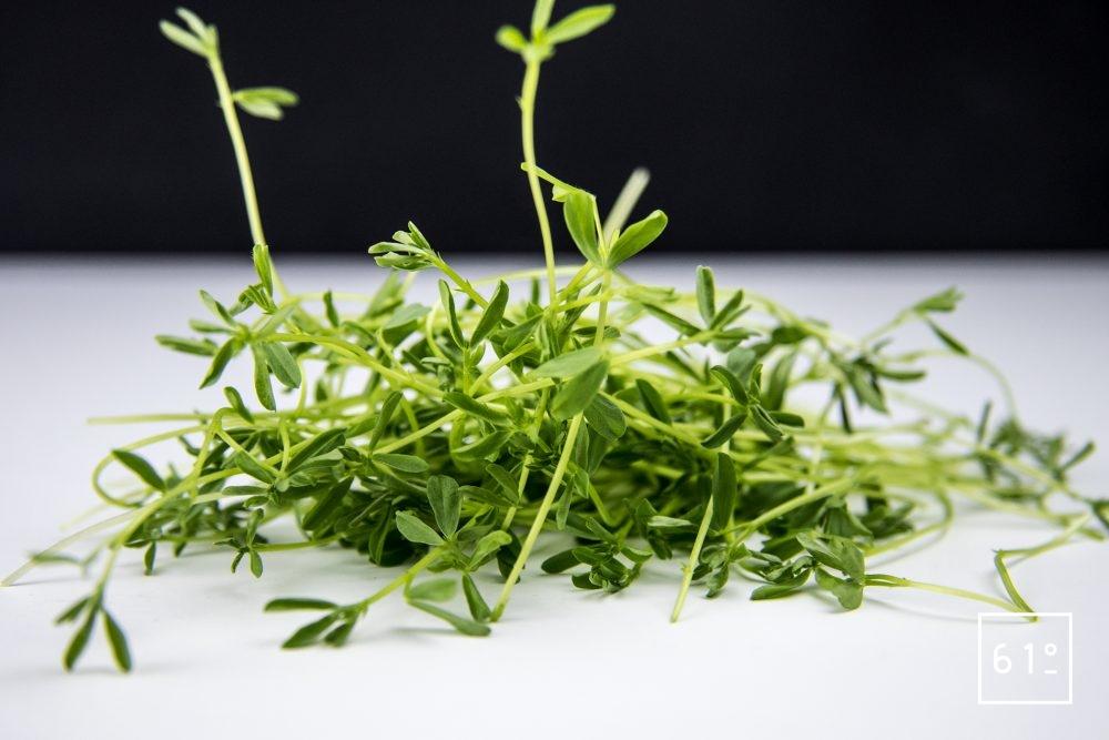 Pousses de lentilles vertes consommables