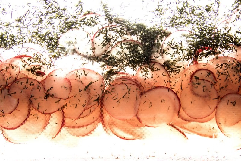 pickles de radis à l'aneth - mettre sous vide