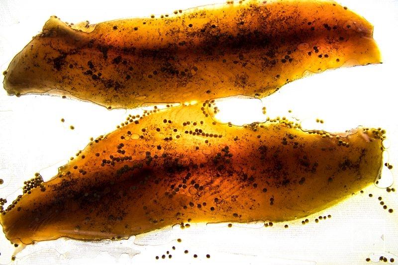 Saumon de fontaine mariné, accompagné de pointes d'asperges cuites sous vide, de poutarque, d'oeufs de poisson, et d'une sauce goyave, vinaigre dashi et huile d'olive fruité noir - laisser mariner au réfrigérateur