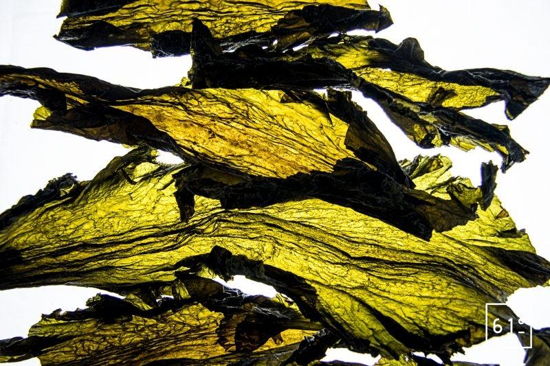 Algue Kombu